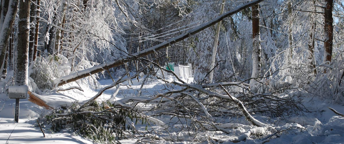 Downed Power Lines Due to Snow in Winter
